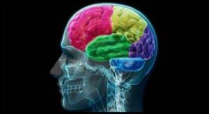 Süchtiges Gehirn
