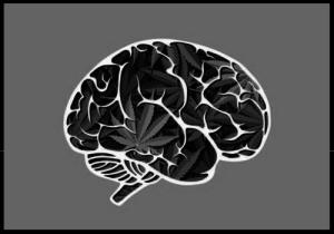Langfristige Auswirkungen von Cannabis auf das Gehirn