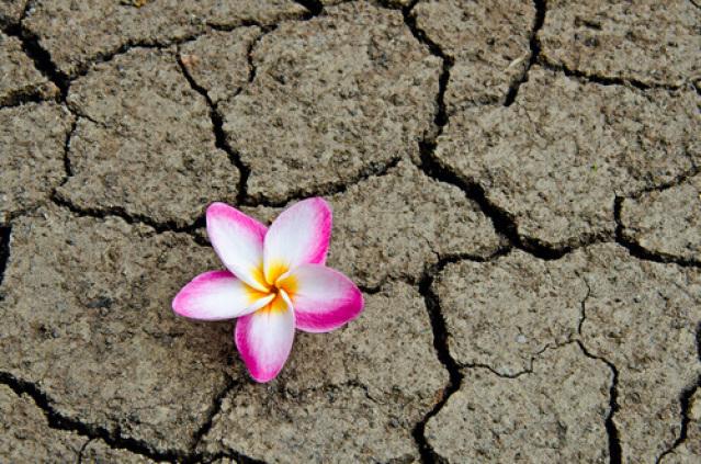Blume durch Steine