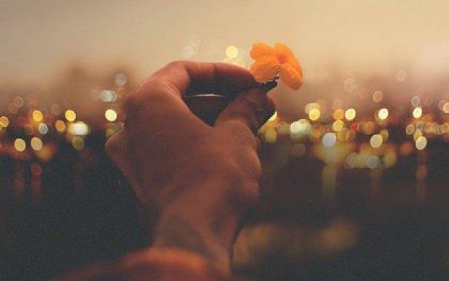 Hand die eine Blume hält